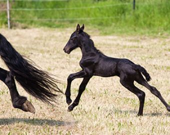 Improving Foal Care with Serum Amyloid A (SAA) Testing