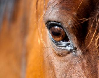 Is Equine Infectious Anemia (EIA) Still a Threat?