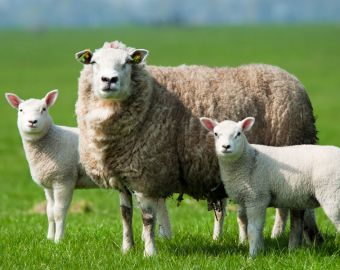 Reasons to Avoid the CF Test for Detecting Antibodies in Cattle, Sheep, Goat and Horse Sera